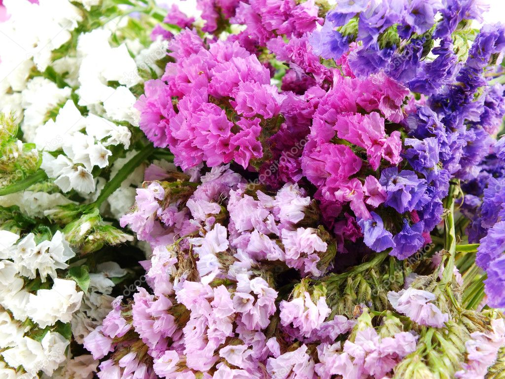 Beautiful Statice Flowers Bouquet Stock Photo May1985 102152872