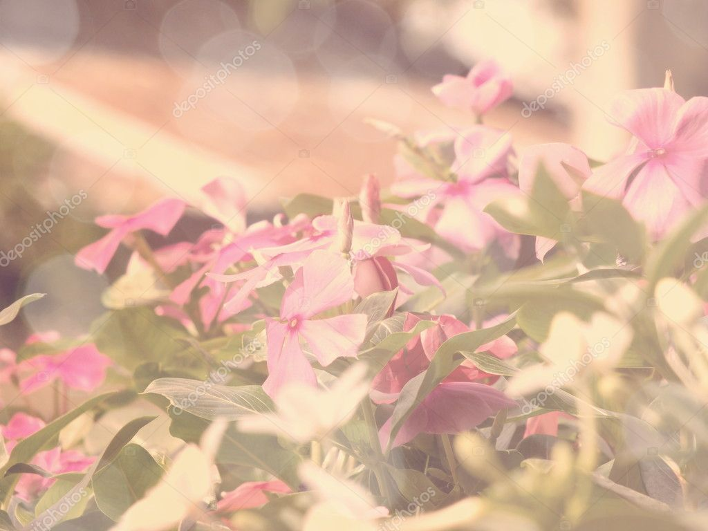 flowers in the garden with retro filter effect