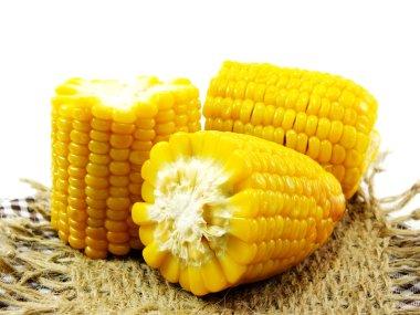 fresh sweet corn isolated on white background