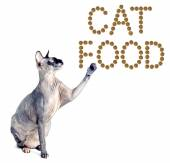 Sphynx cat and the inscription of the feed cat food