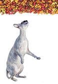 Sphynx kočka ad suché kočky