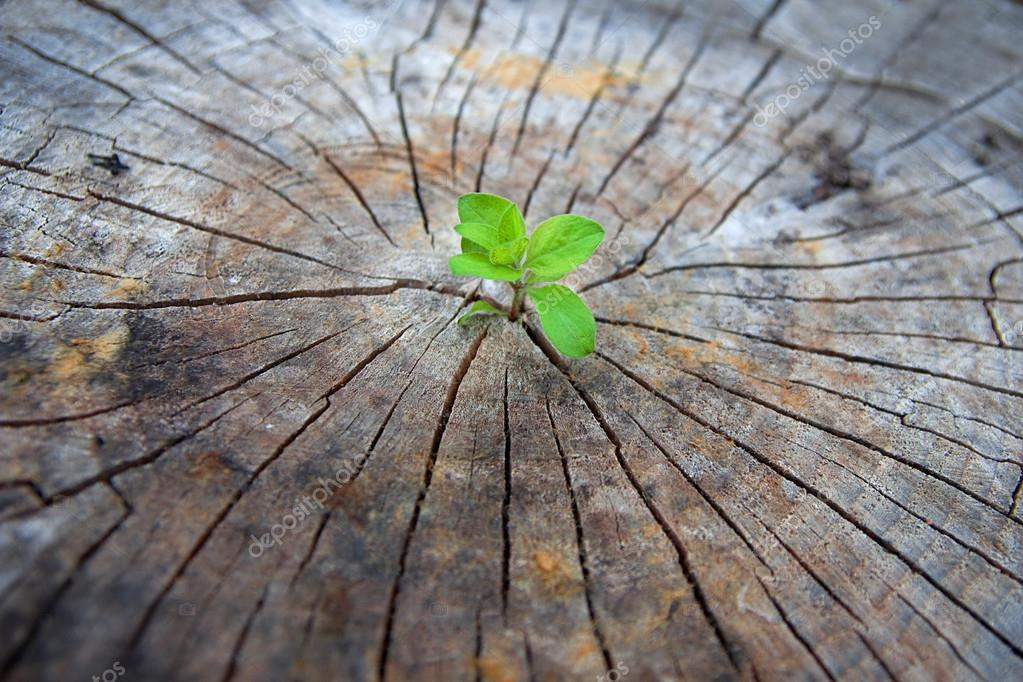 Ecology concept. Rising sprout of old wood and symbolizes the struggle for a new life