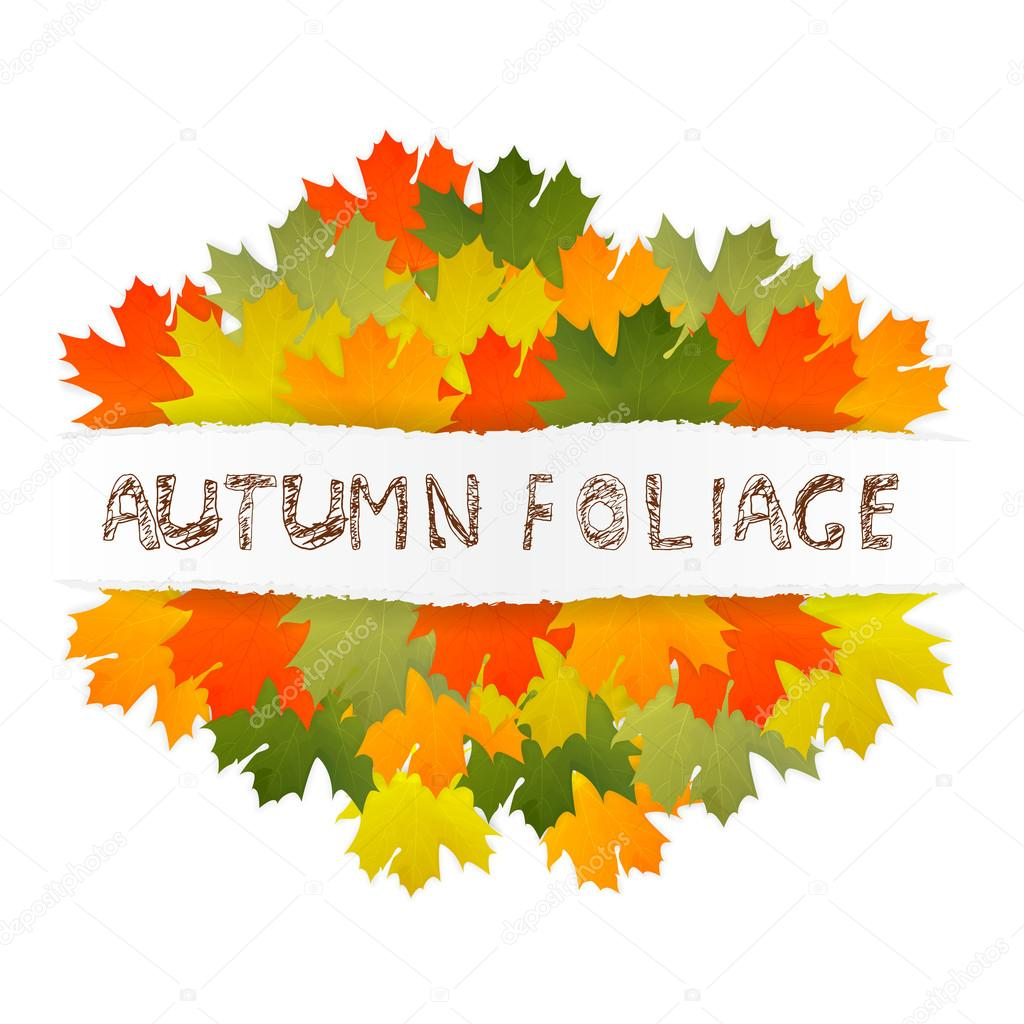 Autumn foliage children lettering. Multicolor autumn maple leaves on a ripped paper