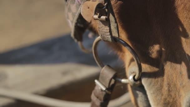 Dýchá, nos a ústa hnědé koně stojí venku s popruhy a uzdu.