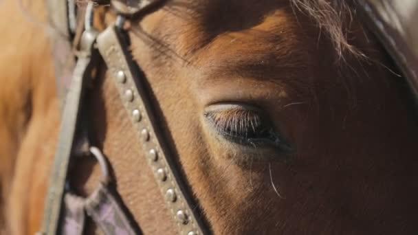 Vyrovnaná oko hnědé koně, který pobývá mimo postroje a uzdu