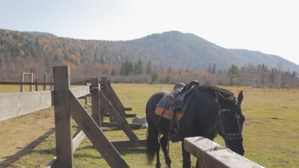 das Pferd mit komplettem Geschirr steht draußen neben dem Zaun.