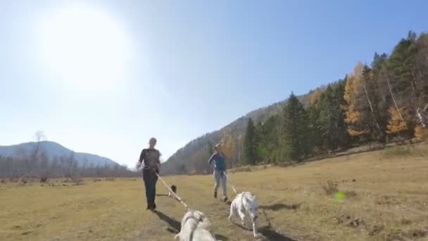 adult artist athlete walking with three dog competition staged on a treadmill harness on the meadow, in the mountains and hills surrounded by dense forest