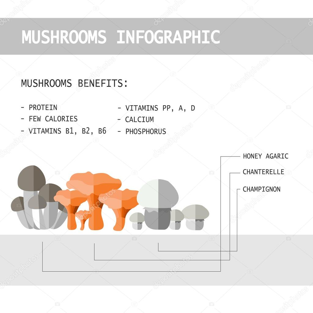 vector illustration of colorful flat design style forest mushroo