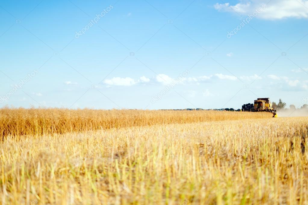 Combine working in fields