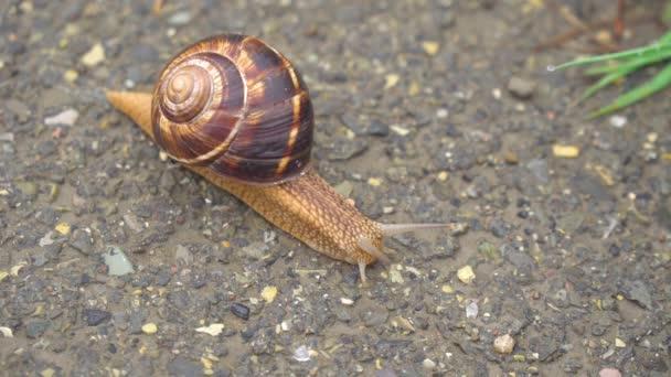 The snail moves slowly on the asphalt, animals