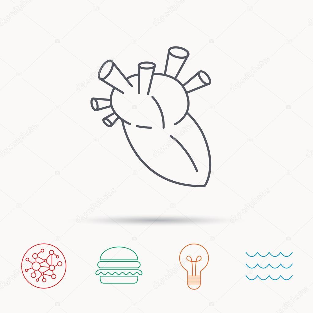 Herz-Symbol. Organ des Menschen Zeichen. Transplantation ...