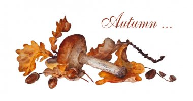 mushroom, painted in watercolor, with oak leaves and acorns on a