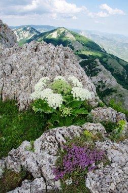 beautiful scenery, Crimean mountains