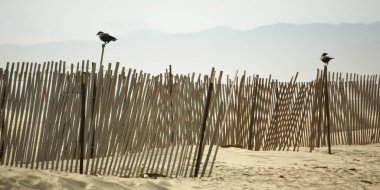 Wooden Fences at Venice Beach