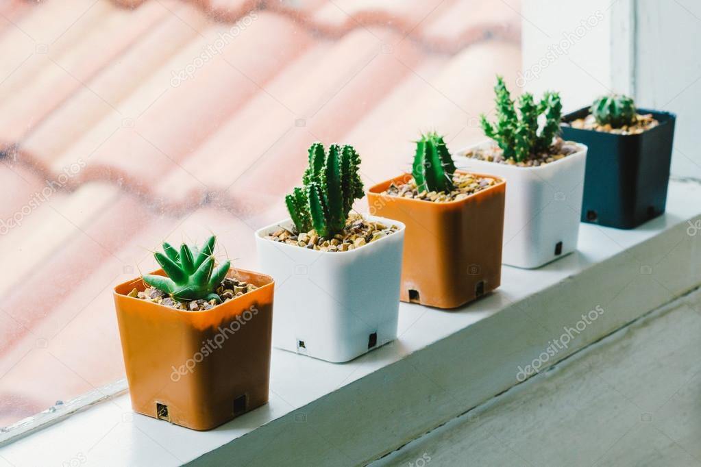 Small cactus pots by the edge of window