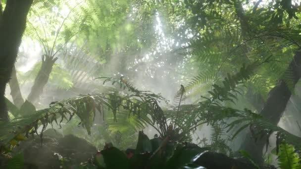 Ranní slunce svítí mezi stromy a mlhou ve svěže zeleném tropickém deštném pralese. Vlhkou mlhou prosvítalo jasné světlo s listy džungle a kapradinami. Krásná svěžest krajina příroda.