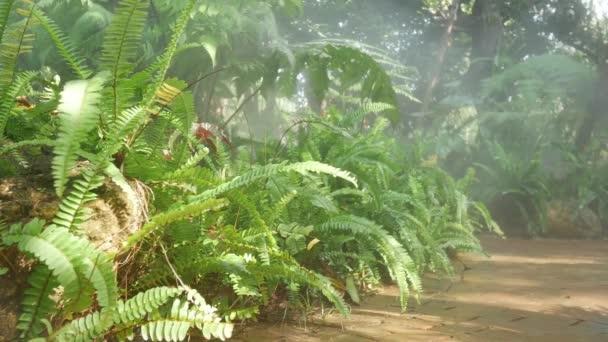 Nahaufnahme Das Farnfeld mit morgendlichem Sonnenlicht Nebelschwaden im tropisch grünen Garten. 4K Grüne Pflanzen und Pfade im tropischen Regenwaldgarten unter dem nebelverhangenen Garten. Ruhige Umgebung entspannen.