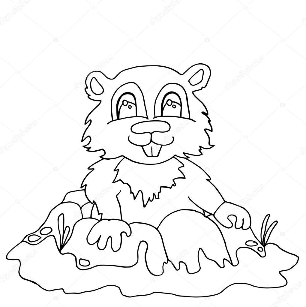 Qualitativ hochwertige Streifenhörnchen Drwan in Gliederung für ...