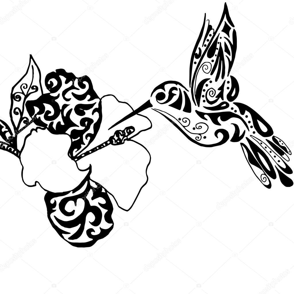 Colibrí de calidad Hiqh y orquídeas para colorear o tatuaje isol ...