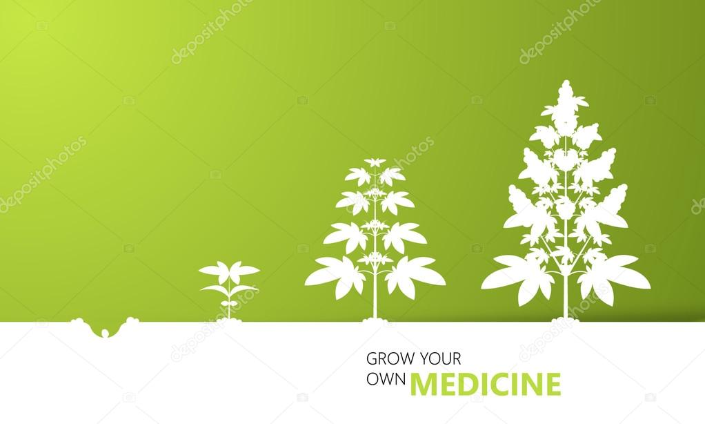 Cannabis growth background concept