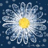 Heřmánek květ vektor květinové ilustrace