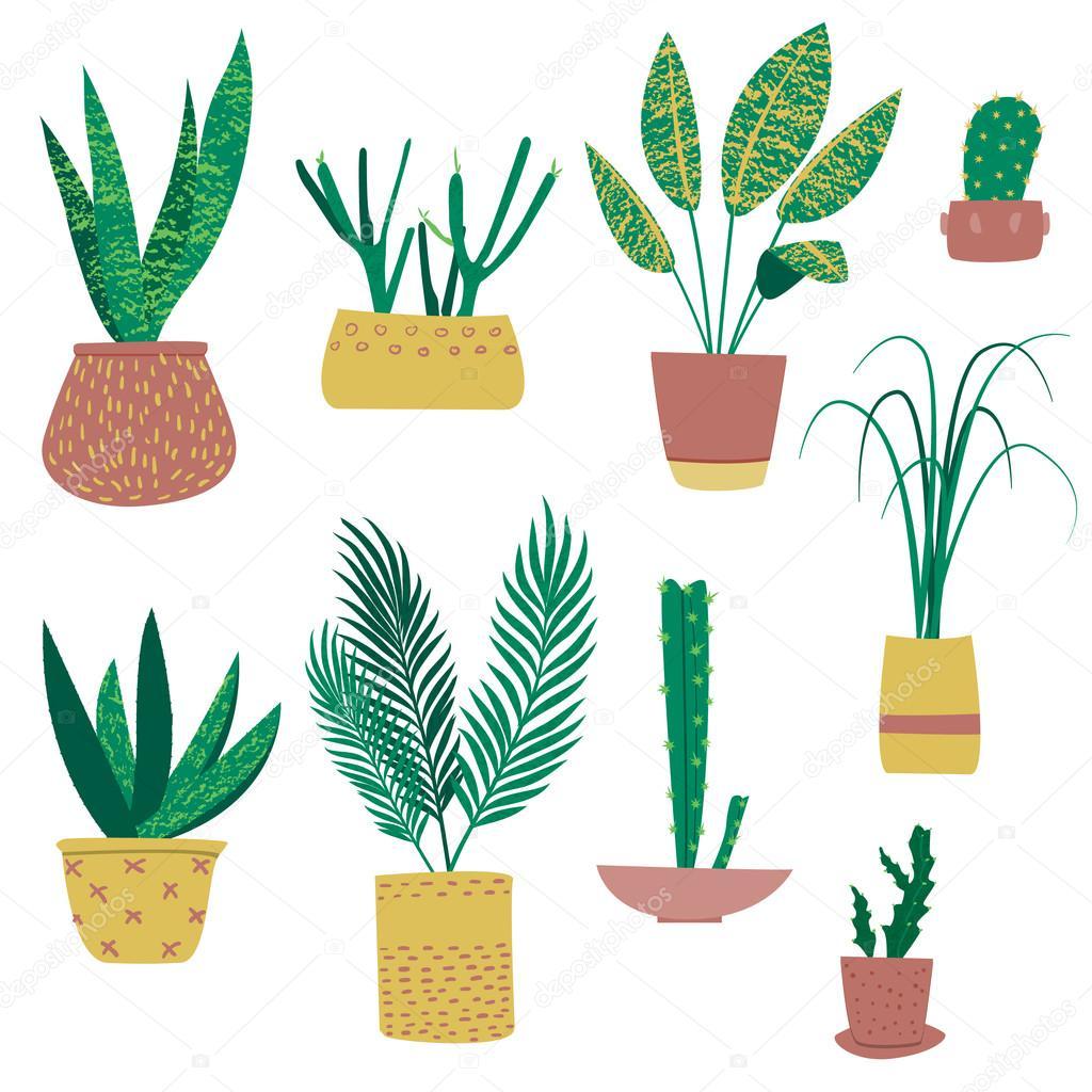 plantes exotiques en pots image vectorielle ammashams 79184014. Black Bedroom Furniture Sets. Home Design Ideas