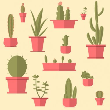 Succulents in pots set