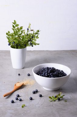 Blueberry harvest, fresh bilberries in a white bowl over grey background.