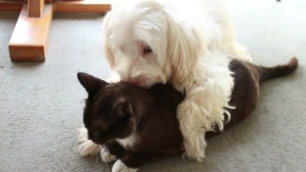 Dog and Cat in Love!  White Dog Kisses and Licks Black  Cat (MS)