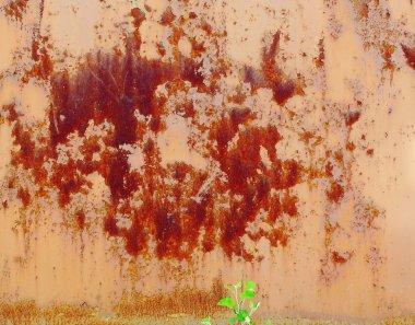rusty wall and tree