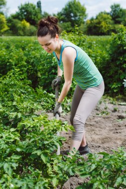women digging potatoes