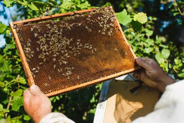 Apiarist holding frame of honeycomb