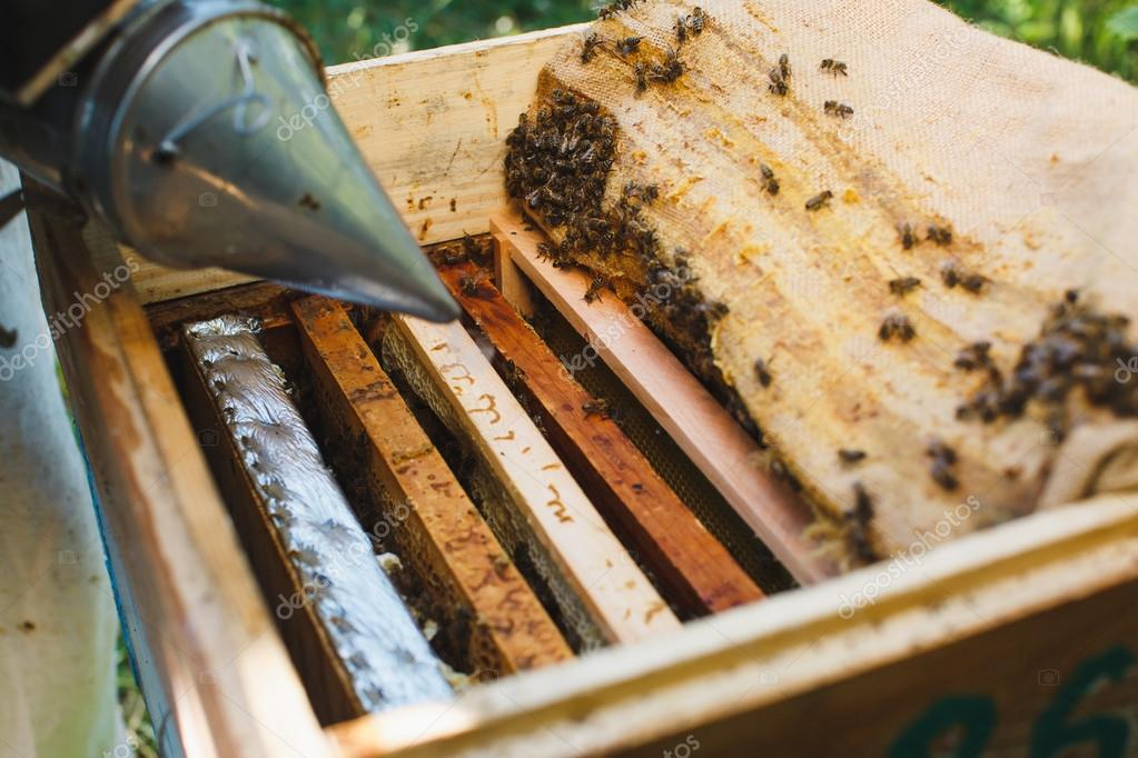 Colmena con diferentes marcos de nido de abeja — Fotos de Stock ...