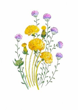 Dandelion and herbs watercolor illustration hand painted in vintage manner
