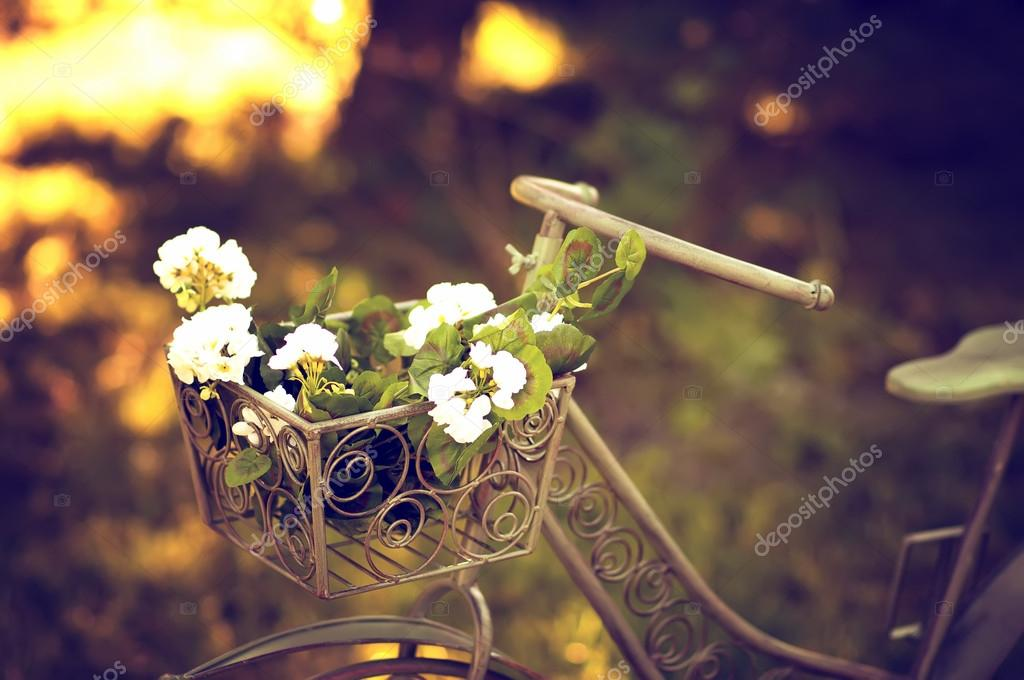 Bicycle  in a garden with basket of flowers.