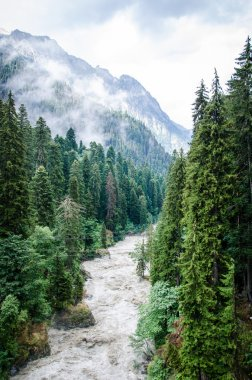 High trees and mountain river