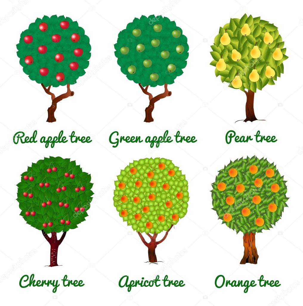 Vector image of fruit trees