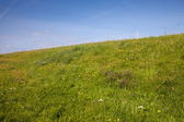Fotografie Dyke and green meadow
