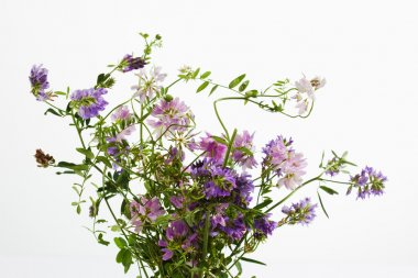 Wild flowers, vetch, crown vetch and tufted vetch