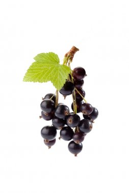 Black currants, white background