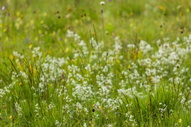 Germany, Bavaria, neglected grassland, grasses and wildflowers