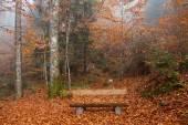 Fényképek Németország, Berchtesgadener Land, őszi erdőben, a padon