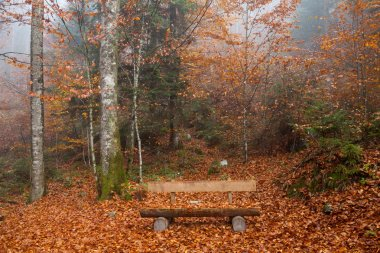 Germany, Berchtesgadener Land, autumn forest, bench