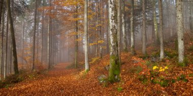Germany, Berchtesgadener Land, autumn forest, fog