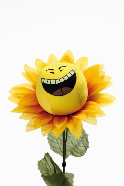 Laughing sun flower against white background