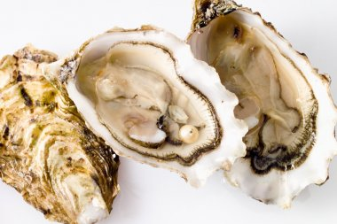 Open oyster with pearl