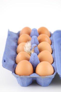 Open egg carton with ten chicken eggs stock vector