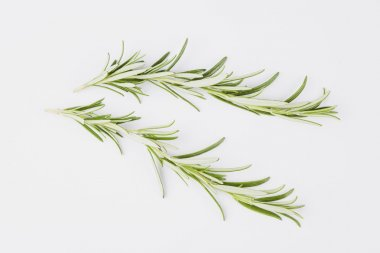 Sprig of fresh rosmary on white background