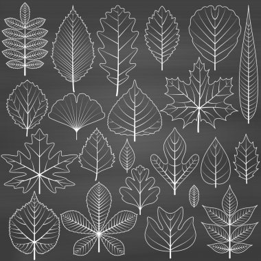Set of tree leaves on chalkboard background. Twenty different icons. Various elements for design. Cartoon vector illustration. Black and white colors