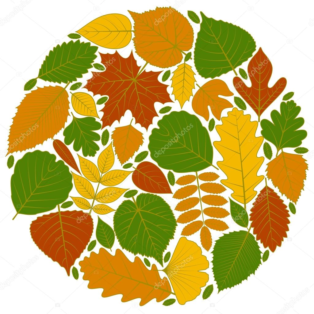 mod le de cercle fait de feuilles d 39 arbres vingt des ic nes diff rentes divers l ments de. Black Bedroom Furniture Sets. Home Design Ideas